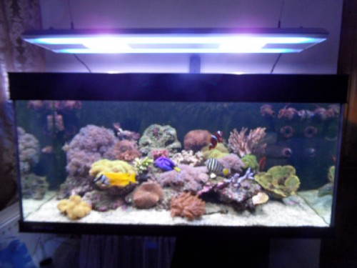 Aquarium recifal 8 mois super complet vendre pour d part for Aquarium recifal complet